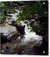 Montreat Creek North Carolina Acrylic Print