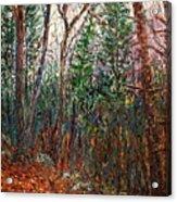 Montville Wood Acrylic Print