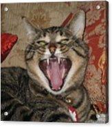 Monty's Yawn Acrylic Print