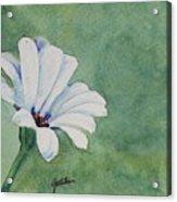 Mood Flower II Acrylic Print