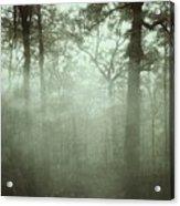 Moody Foggy Forest Acrylic Print