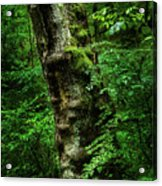 Moody Tree In Forest Acrylic Print
