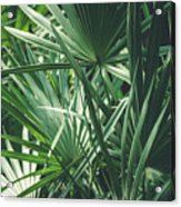 Moody Tropical Leaves Acrylic Print