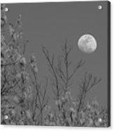 Moon And Trees B And W Acrylic Print