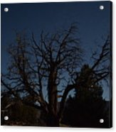 Moon Brings Life To An Old Tree Acrylic Print