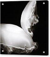 Moon Jellyfish Touching Acrylic Print