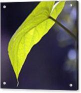 Moon Leaf Acrylic Print