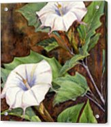 Moon Lilies Acrylic Print by Catherine G McElroy