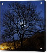 Moon Rise Behind Tree Silhouette At Night Acrylic Print