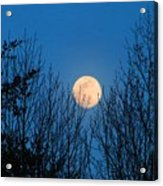 Moon Rising In The Trees Acrylic Print
