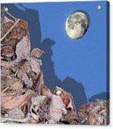 Moon Shadow Acrylic Print