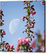 Moon Through The Crabapple Blossoms Acrylic Print