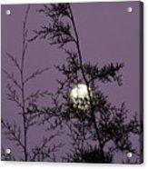 Moon Trees Acrylic Print