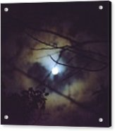 Moonlight And Branch 2 Acrylic Print
