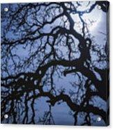 Moonlight And Oak Tree Acrylic Print