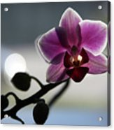 Moonlight And Orchid Acrylic Print