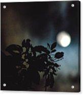 Moonlight And Tree 2 Acrylic Print