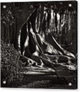 Moonlight In The Park - Valencia Acrylic Print