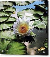 Moonlight Lily  Acrylic Print