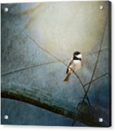 Moonlit Chickadee Acrylic Print