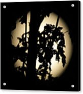Moonlit Leaves No 1 Acrylic Print