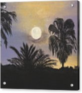 Moonlit Palms In Tampa Acrylic Print