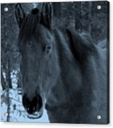 Moonlit Stallion Acrylic Print