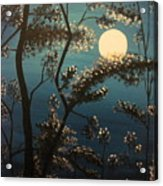 Moonlit Trees Acrylic Print