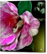 Moonlit Wild Rose Acrylic Print