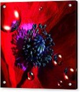 Moonlite Poppy Drops Acrylic Print