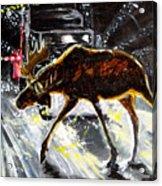 Moose Crossing Acrylic Print