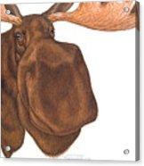 Moose Head Acrylic Print