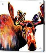 Moose In Orange Acrylic Print
