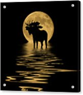 Moose In The Moonlight Acrylic Print