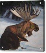 Moose In Winter Acrylic Print
