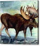Moose Reflections Acrylic Print