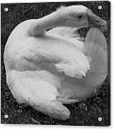 Moose The Goose Acrylic Print