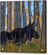 Moosey Acrylic Print