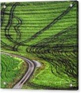 Moravian Patterns Acrylic Print