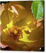 Morden Sunrise 2 Acrylic Print