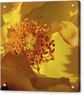 Morden Sunrise Acrylic Print