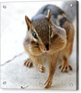 More Nuts Please Acrylic Print