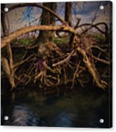 More Roots In Creek Acrylic Print