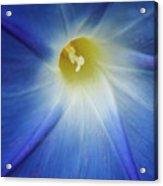 Morning Blue Acrylic Print