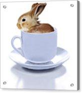 Morning Bunny Acrylic Print