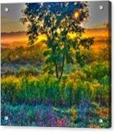 Morning Color-4 Acrylic Print