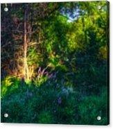 Morning Color Acrylic Print