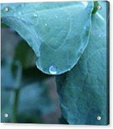 Morning Dew Drops Acrylic Print