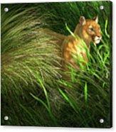 Morning Dew - Florida Panther Acrylic Print