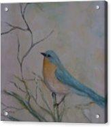 Morning Finch Acrylic Print